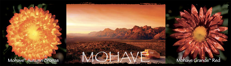 Selecta Mohave banner