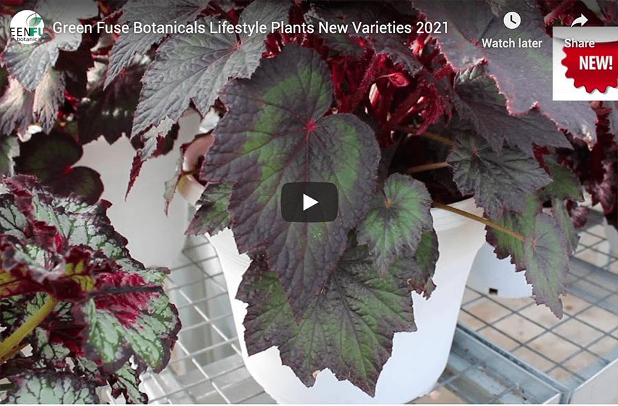 Botanicals Lifestyle Plants video