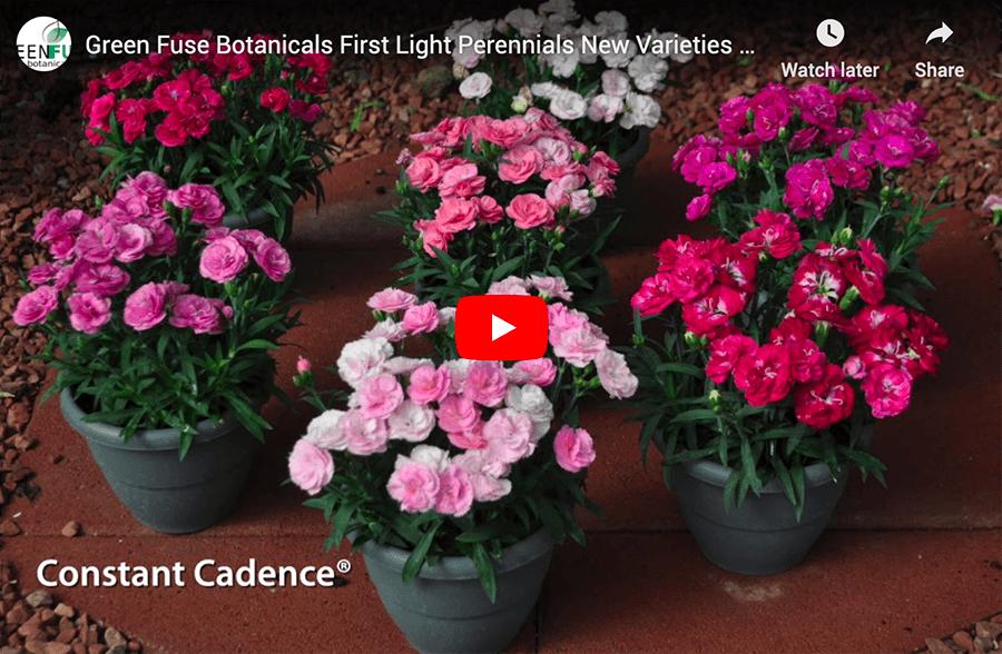 Green Fuse Botanicals First Light Perennials video