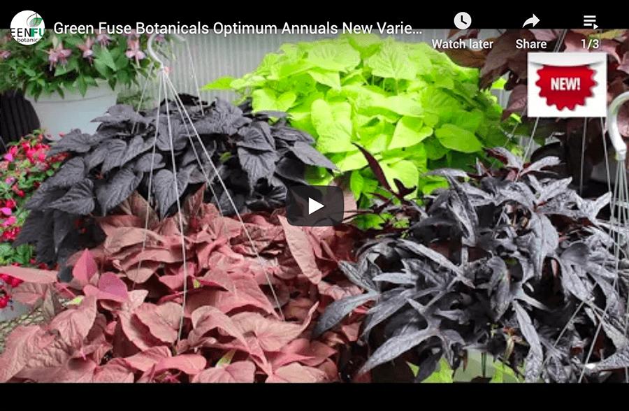 Botanicals Optimum Annuals video
